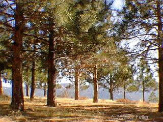 Ball flat angeles national forest big pines wrightwood for Lake fishing near los angeles