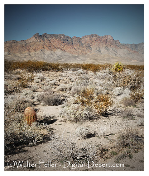 Providence Mountains, Mojave National Preserve